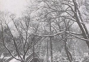 Music & Flower Vol. 1 - 雪 - 夜空に映えるウメの花。雪の日の朝の匂いがする音楽。