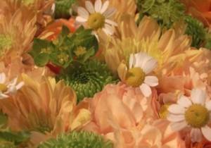 Music & Flower Vol.  5 - Sweet Seasons- 春のメロディーを感じる風景。