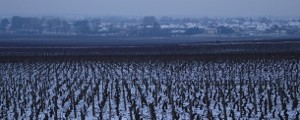 熊田有希子のブルゴーニュ便り - 1 - ブドウ畑と地球温暖化。