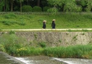 from 山梨 - 18 - 卯の花腐し その1~京都から持ち帰る、初夏の緑。