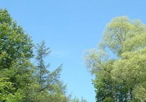 from 北海道(道央) - 54 - 「素の木」に触れ、そこに何かを感じてみる。