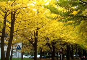 from 北海道(道央) - 56 - 文化と芸術を道内外へと発信。札幌市民の憩いの場「中島公園」。