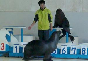 from 北海道(道央) - 55 - 北海道民に身近な「おたる水族館」。今年から通年営業開始!
