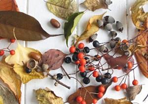 籾山由美の東京-島根 小さな暮らし落ち葉でクリスマスリース。トートバック抱えて落ち葉拾い。
