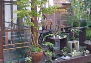 籾山由美の東京-島根 小さな暮らしお部屋を綺麗に片つけて晴れ舞台に。盆栽のたのしみ。