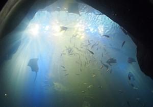 from 広島 - 16 - 瀬戸内海をまるごと再現、水族館で海の幸に出会う!?