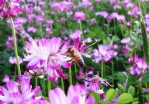 from 鳥取 - 86 - 蜜蜂の贈り物! 万葉の里に光る金色のはちみつとれんげ米。