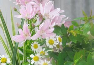 籾山由美の東京-島根 小さな暮らし季節がうつる春の足音。花もたおやかに優しく。