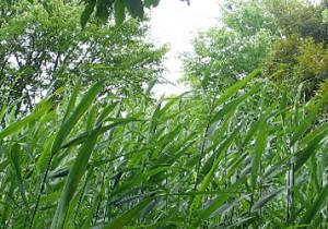 籾山由美の東京-島根 小さな暮らし子供に帰る日。島根から夏草で涼をとりましょう。