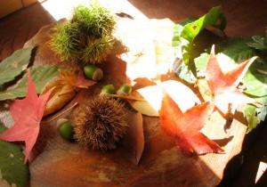 籾山由美の東京-島根 小さな暮らし花摘みで道草、島根から。秋の彩りを活けてみましょう。