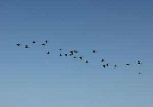 籾山由美の東京-島根 小さな暮らし北へ帰る鳥の群れ。松江から。