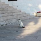 街で出会った猫ちゃん。エジプト系の猫のように品があった。