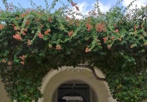 ホノルル美術館 ジョージア・オキーフとアンセル・アダムス展 ホノルルの青い空、オキーフの白い花