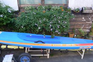 青いボードに夏の花が残って咲いて