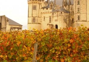 from パリ(河)- 27 - フランスのワイン事情(2) 勢いを増すビオワイン。