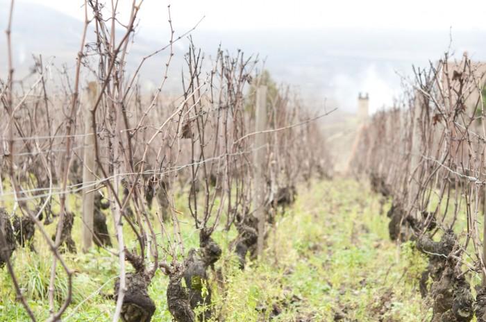 マランジェの丘の上のシュブロの畑