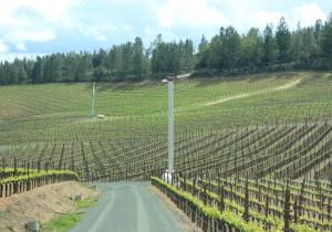 カリフォルニアスタイル - 5 - エレガントなワインを生むソノマのワイナリー