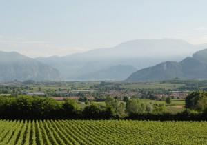 イタリア銘醸ワイン案内 フランチャコルタの最高峰カ・デル・ボスコの世界