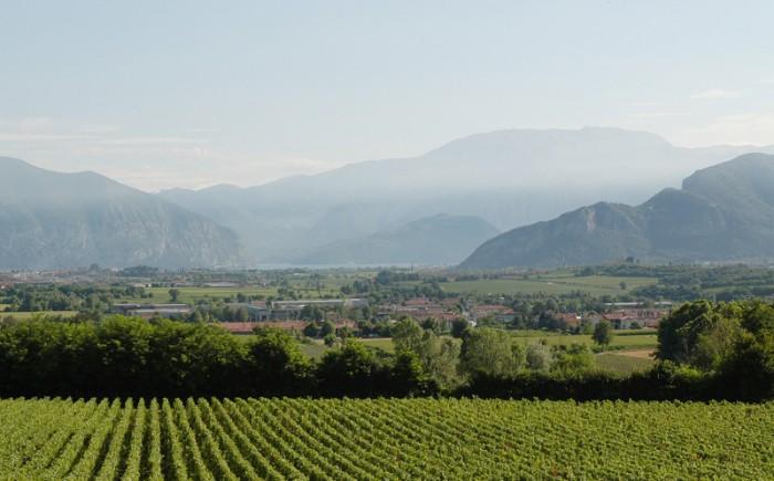 遠方にアルプスが見えるフランチャコルタの畑