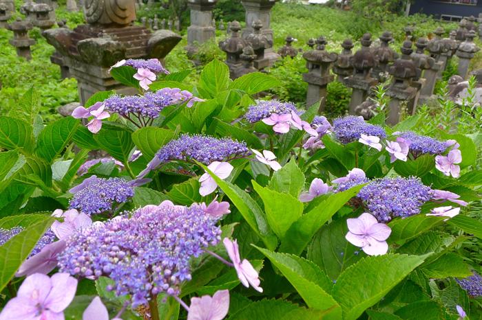 内藤家は江戸時代、延岡藩の大名家。冬に来ると石塔群が素晴らしい。