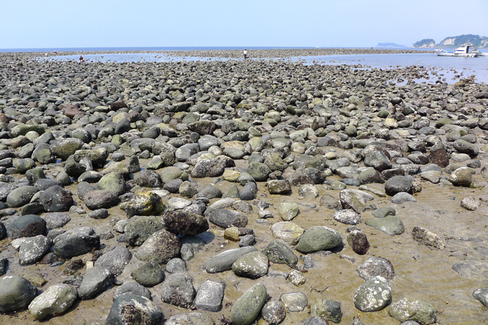 和賀江島の石積みは鎌倉時代のもの。遠くに江ノ島も見える。
