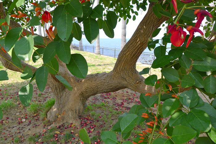 木登りして、木陰で昼寝でもしたくなるなあ。