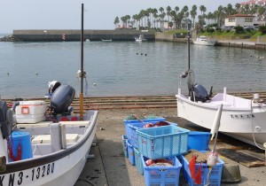 田中晃二の道草湘南《犬の鼻、猫の舌》逗子小坪漁港の魚市場で、マイワシとアジとカマスとスズキを買って。