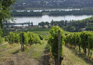 クオリティワインを生む首都、ウィーンで、ワインカルチャーを体験。その1