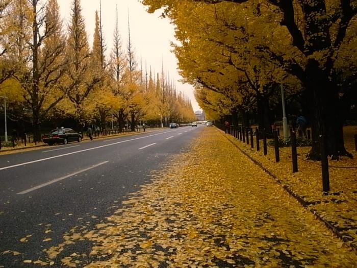 トーキョーモビリティ16。ご存知、神宮外苑銀杏並木の黄色い絨毯。