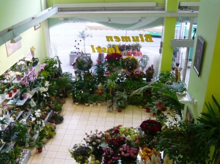 メッセ広場では花屋だってギャラリーです。ブルーメンインセルの一階花屋コーナー。.