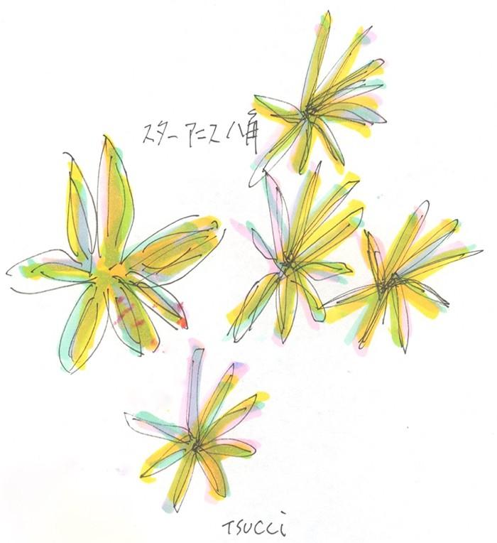 中華料理といえばこのスパイス 八角。© Takayoshi Tsuchiya