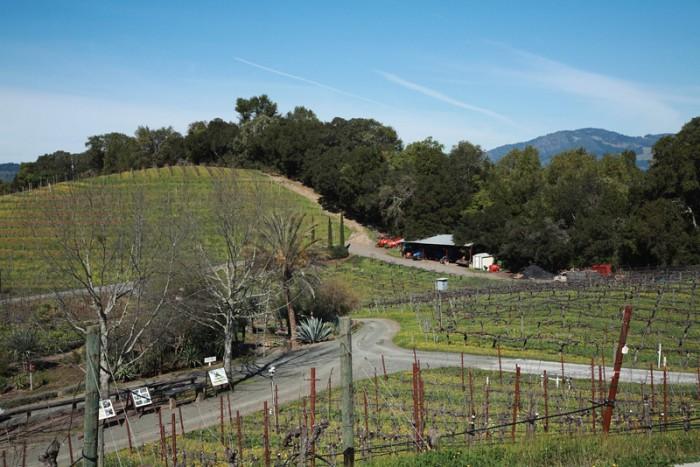 畑のみならず、ワイナリーが位置する山全体の生態系に配慮してワインを生んでいる