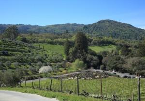 カリフォルニアのピノ・ノワール - 4 - こだわりのワイナリーが生む、個性あるピノ・ノワールたち