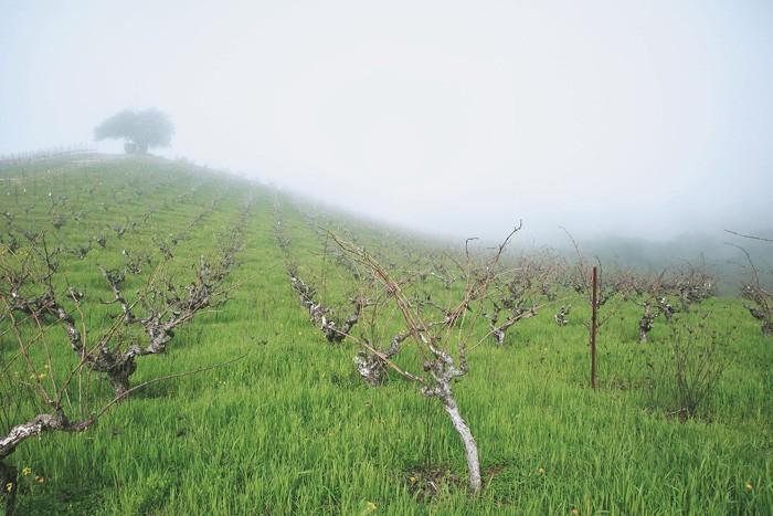 靄に覆われる標高400メートル近いブランドリンの畑