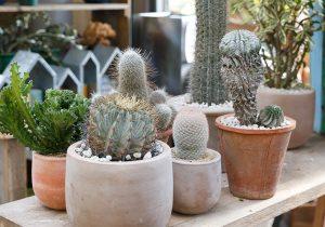 dacapo×TOKOSIE植物のコーディネイトが センスアップする3つのアイディア