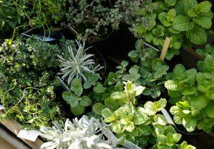 dacapo×TOKOSIEマンションのベランダに   ピッタリな植物はどれ?
